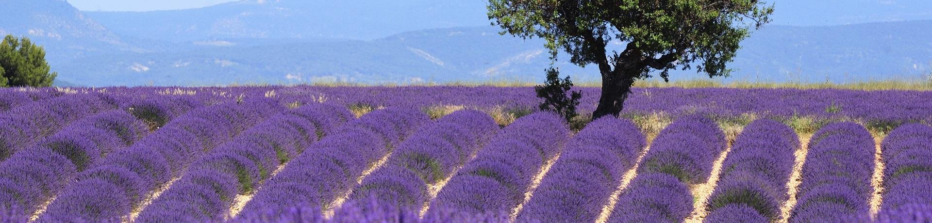 Frankreich: Provence - Emotion II