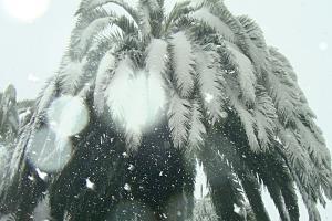 Spanien Schnee Und Flugausfalle Durch Sturm Filomena