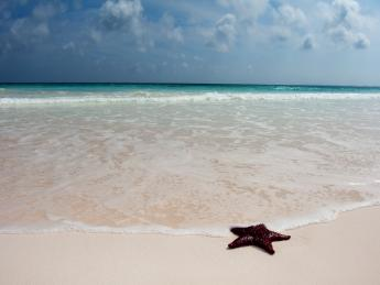 4187+Bahamas+Harbour_Island+TS_162578749