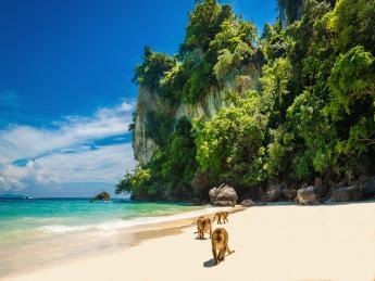 6558+Thailand+Insel_Koh_Pee_Pee_(Phi_Phi)+Monkey_Beach+GI-476233782