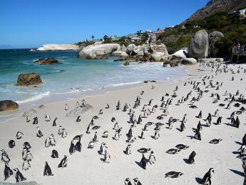 3802+Südafrika+Simon's_Town+Boulders_Beach+GI-930492420