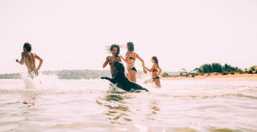 Hund+Strand+baden