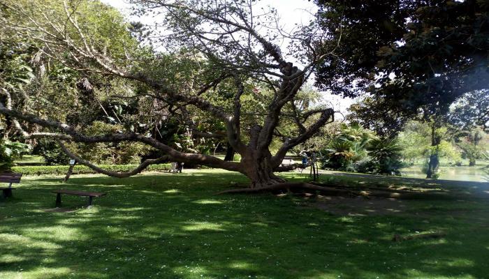 Lissabon+Botanischer_Garten#CHECK24/Drebenstedt